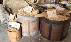 Oikomuseo del Grano e della cultura locale